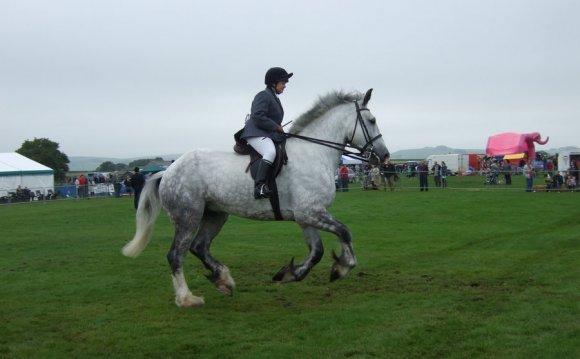 Shire Horse Riding Shire Horse