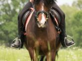 Buy the right riding equipment online