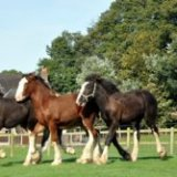 younger horses suitable to create in for cycling and operating